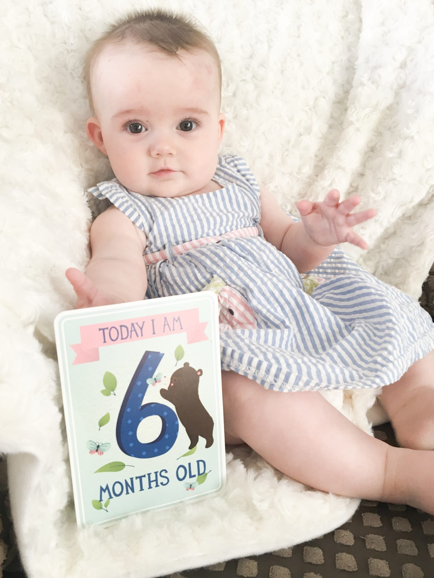 Six Months of Baby Holly